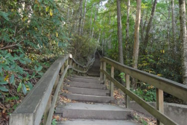 Steps going up into the forest