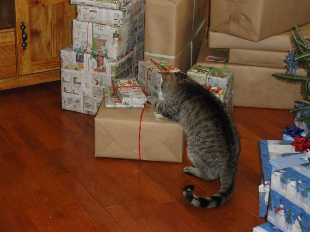 Cat playing with a bow on a present