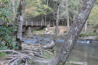 Bridge over water in a forest