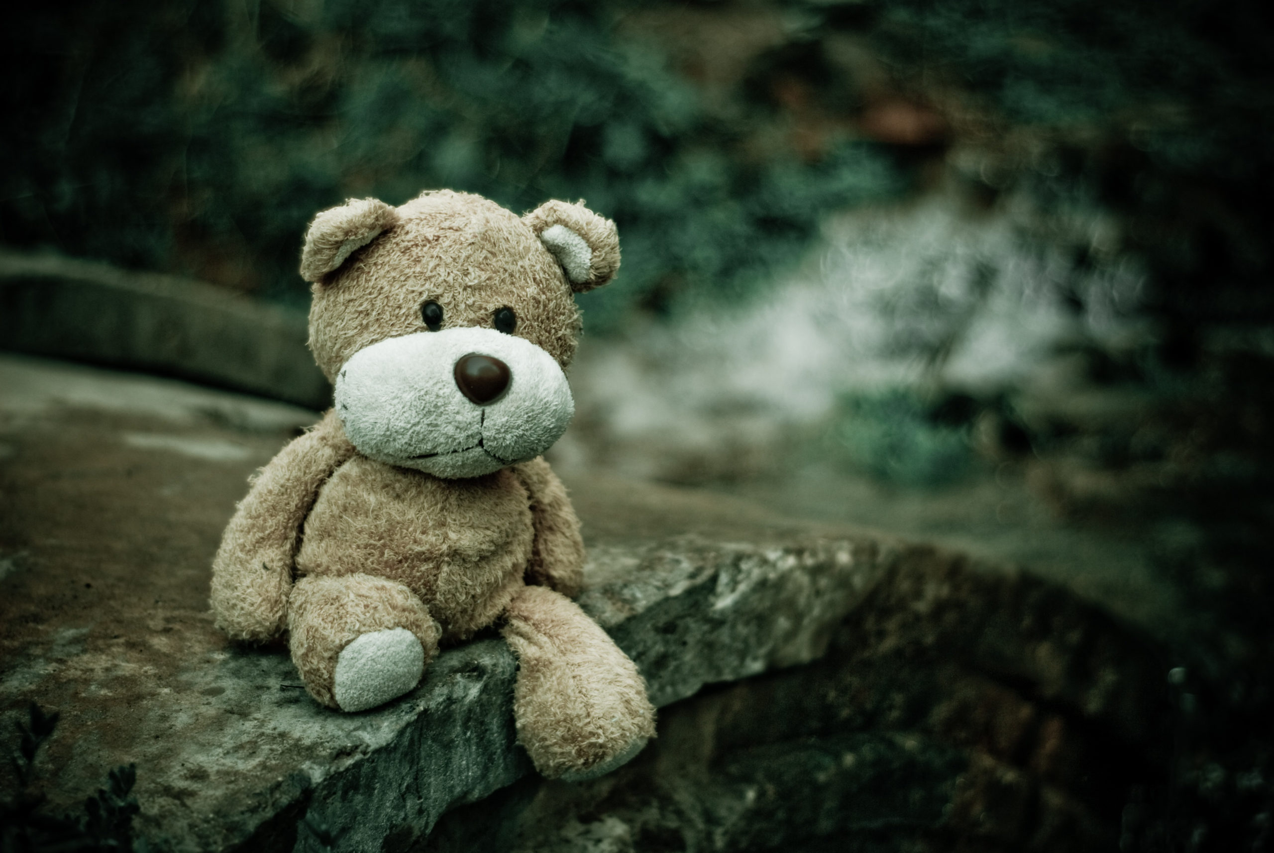 Teddy Bear sitting on a log